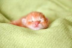 Rood pasgeboren katje Stock Afbeelding