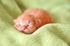 Rood pasgeboren katje Royalty-vrije Stock Afbeeldingen