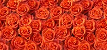 Rood rozen naadloos patroon Royalty-vrije Stock Foto