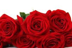 Rood rozenboeket op witte achtergrond Royalty-vrije Stock Foto's