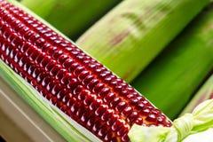 Rood Ruby Corn, de Gezonde Organische Groente van Thailand met Aard Sw royalty-vrije stock afbeeldingen