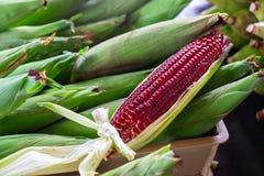 Rood Ruby Corn, de Gezonde Organische Groente van Thailand met Aard Sw stock foto