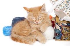 Rood slaperig katje stock fotografie