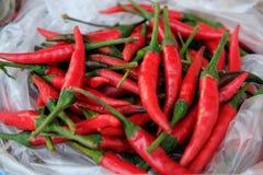Rood Spaanse peperdocument Royalty-vrije Stock Foto's
