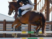 Rood sportpaard die door hindernis springen Het paard toont in detail het springen Stock Afbeeldingen