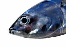 Rood tonijndetail Stock Afbeelding