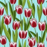 Rood tulpen naadloos patroon, blauwe achtergrond Stock Fotografie