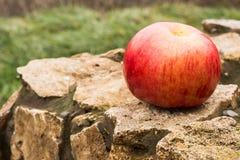 Rood, vers en rijp Apple royalty-vrije stock afbeelding