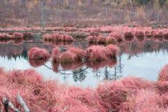 Rood vervuild gras Royalty-vrije Stock Fotografie