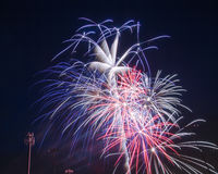 Rood, wit en blauw vuurwerk Stock Afbeeldingen