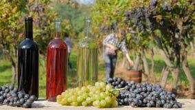Rood, wit en rosé wijn Vrouwen die druiven op achtergrond oogsten stock videobeelden