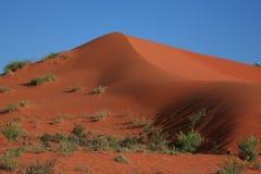 Rood zandduin in de Kalahari Royalty-vrije Stock Afbeeldingen