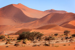 Rood zandduin, Sossusvlei, Namibië Stock Afbeelding