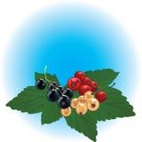 Rood, zwarte & witte aalbes vector illustratie