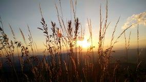 Roodachtig Gras met randlicht tijdens Zonreeks royalty-vrije stock afbeeldingen