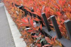 Roodachtige bladeren Stock Fotografie
