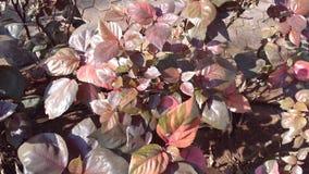 Roodachtige bruine bladeren Royalty-vrije Stock Afbeelding
