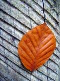 Roodbruin blad op boomstam stock afbeelding