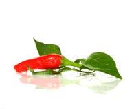 Roodgloeiende peper Stock Foto's