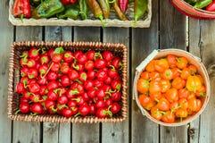 Roodgloeiende peper in een rieten mand Stock Fotografie