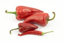 Roodgloeiende peper in een rij Stock Fotografie