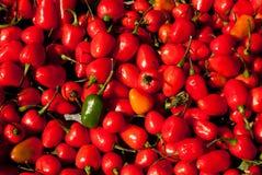 Roodgloeiende Spaanse peper Stock Foto's