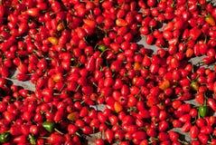 Roodgloeiende Spaanse peper Royalty-vrije Stock Fotografie