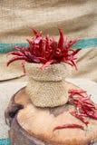 Roodgloeiende Spaanse peper Stock Fotografie
