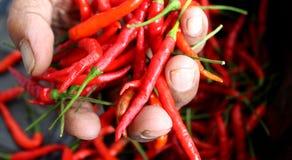 Roodgloeiende Spaanse peper in oude damehand Stock Foto