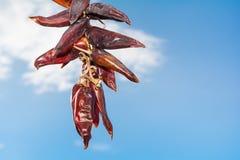 Roodgloeiende Spaanse peper peper in de hemel Stock Foto