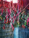 Roodgloeiende Spaanse peperpeper stock afbeelding