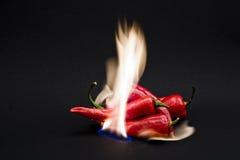 Roodgloeiende Spaanse peperpeper Royalty-vrije Stock Fotografie