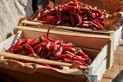 Roodgloeiende Spaanse peperpeper in houten dozen onder de zon stock fotografie