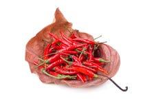 Roodgloeiende Spaanse peperpeper op Droge bladachtergrond Kruidige Spaanse pepers peppe Royalty-vrije Stock Fotografie