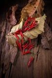 Roodgloeiende Spaanse peperpeper op Droge bladachtergrond Kruidige Spaanse pepers peppe Stock Foto's