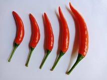 Roodgloeiende Spaanse pepers stock foto's
