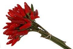 Roodgloeiende Spaanse pepers Royalty-vrije Stock Foto's