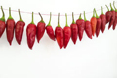 Roodgloeiende Spaanse pepers Stock Afbeeldingen