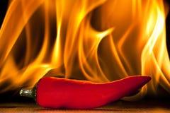 Roodgloeiende Spaanse peperspeper royalty-vrije stock afbeeldingen