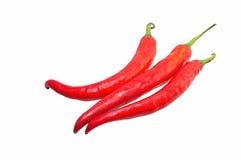 Roodgloeiende Spaanse peperspeper Stock Fotografie