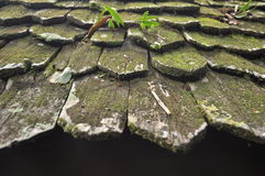 Roof. Mold growing on the roof. Help maintain a stable roof Royalty Free Stock Photography