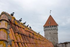 Roof of acient castle and donjon stock image