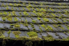 Roof ALGAE, MOSS, MOLD & LICHEN. Roof whit ALGAE, MOSS, MOLD & LICHEN Royalty Free Stock Images