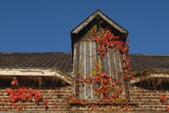 Roof with autumn maple leaves Royalty Free Stock Photography