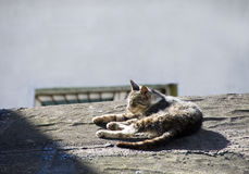 Roof cat Stock Images