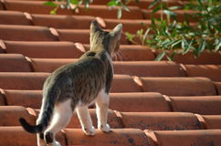 Roof cat royalty free stock photography