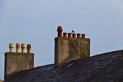 Roof and chimneys from old british building Stock Photography