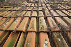 Roof clay tiles Royalty Free Stock Image