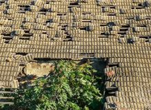 Roof collapsing with a tree emerging royalty free stock photography