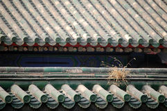 Roof covered with glazed tiles. Dead bristle grass on the wall, the roof of old temple and wall covered with glazed tiles. shot at temple of heaven park, beijing Royalty Free Stock Photos